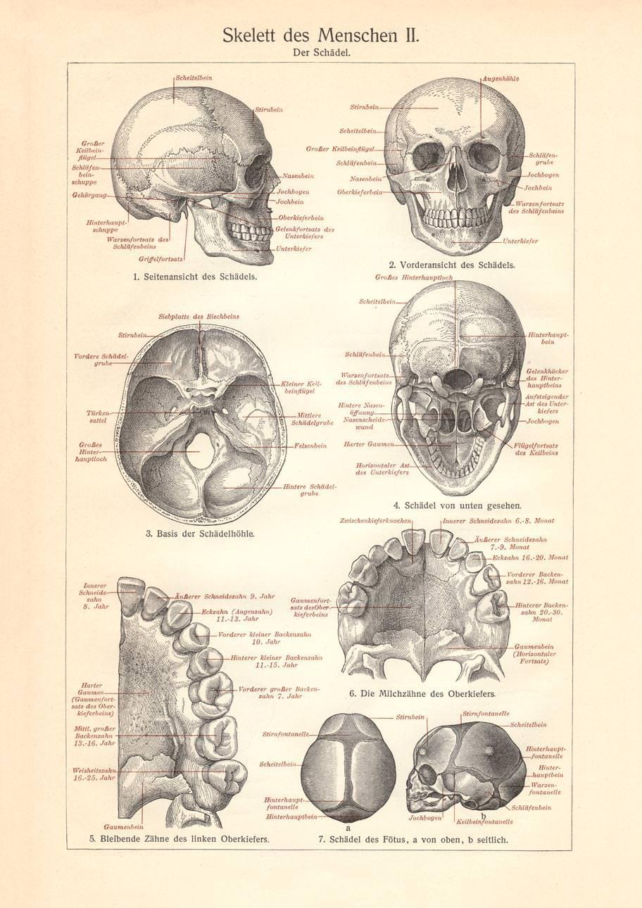 Großzügig Wiley Anatomie Und Physiologie 13. Ausgabe Galerie ...