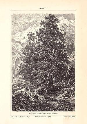 II Holzstich 1906 Alter historischer Druck Palmen I