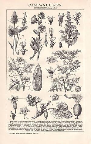 Alter historischer Druck Fliegen und Schneckenblumen Chromolithographie 1904