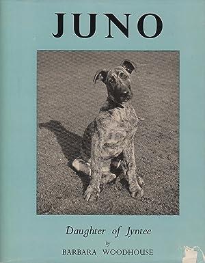Juno - Daughter of Jyntee: Woodhouse Barbara