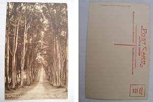 Antigua Postal - Old Postcard : Forest: Sin autor