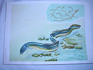 Acuarela Original - Original Watercolor : LA ANGUILA: MASCAROS AMADOR Francisco
