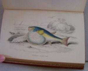 The Naturalist's Library: Vol. XXXVII - Ichthyology - British Fishes, Part II: Jardine, ...