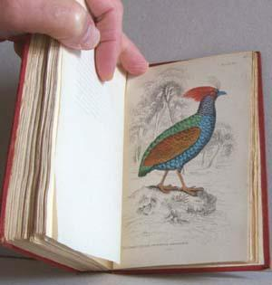 The Naturalist's Library Vol. VIII: Ornithology - Game Birds: Jardine, William