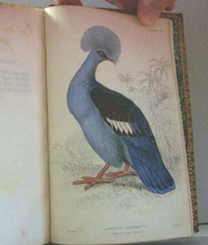 The Naturalist's Library - Ornithology, Vol. V (5): Gallinaceous Birds, Part III (3) - Pigeons...