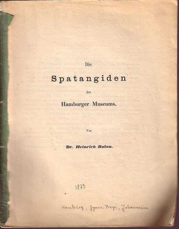 Die Spatangiden des Hamburger Museums. Aus Gymn.: Bolau, Heinrich: