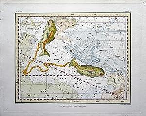 Pesces: Jamieson, Alexander