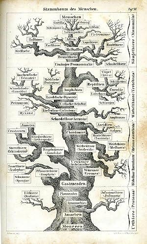 Anthropogenie oder Entwicklungsgeschichte des Menschen. Gemeinverständliche wissenschaftliche ...