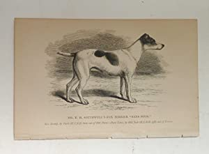 Fox terrier 'Sans Peur' Dog Print (British: Hugh Dalziel