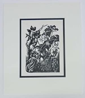 Berries, 1936 Lithograph
