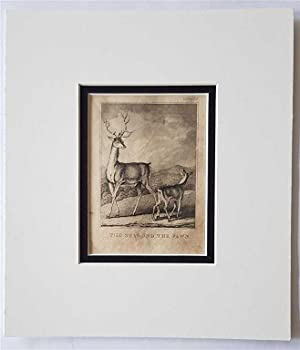 C18th Aquatint engraving print The Stag and the Pawn Fable 63