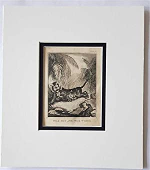 C18th Aquatint engraving print The Fox and the Tiger Fable 31