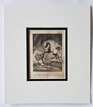 C18th Aquatint engraving print The Horse and the Lion Fable 55