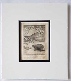 C18th Aquatint engraving print The Porcupine & the Snake Fable 40