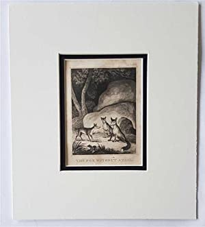 C18th Aquatint engraving print The Fox without a Tale Fable 66