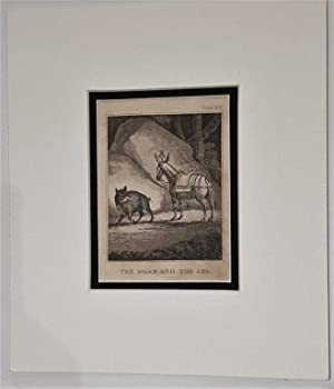 The Boar and the Ass C18th Aquatint engraving print Fable 102