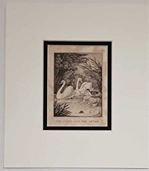 Swans and the Ducks C18th Aquatint engraving print Fable 236