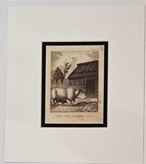 The Sow and her Pigs C18th Aquatint engraving print Fable 243