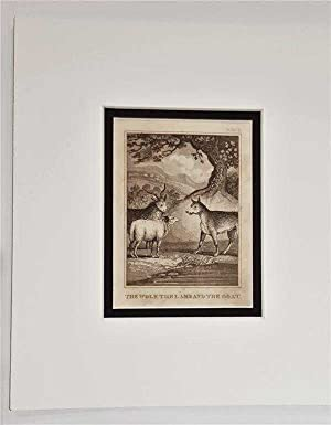 C18th Aquatint engraving print The Wolf the Lamb and the Goat Fable 15