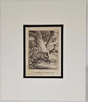 The Fox and the Boar C18th Aquatint engraving print Fable 143