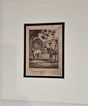 The Wanton Calf C18th Aquatint engraving print Fable 52