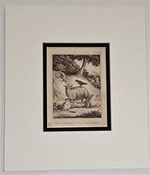 The Jackdaw and the Sheep C18th Aquatint engraving print Fable185