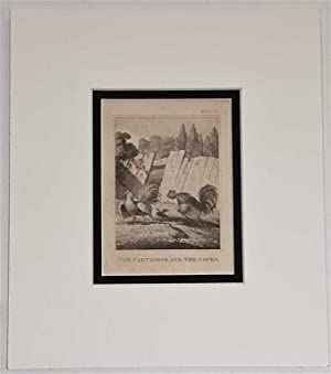 The partridge and the Cocks C18th Aquatint engraving print Fable 89