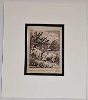 The Frogs and the Fighting Bulls C18th Aquatint engraving print Fable 111