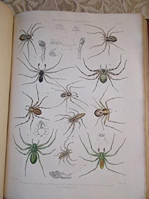 A History of the Spiders of Great: Blackwall, John