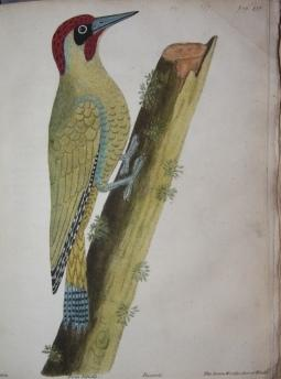 Supplement to the General Synopsis of Birds: Latham, John