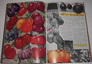 Stark's Salesman's Plate Book Showing New 7 U.S. Patent Prize Fruit Trees and Ornamentals...