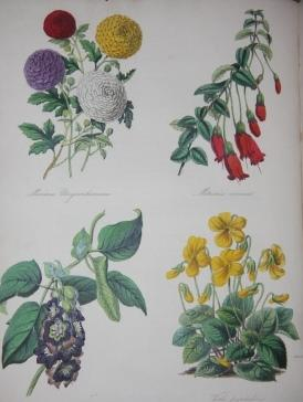 The English Flower Garden: A Monthly Magazine of Hardy and Half-Hardy Plants. (Two Volumes): ...