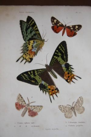 Histoire Naturelle Des Insectes: Orthopteres, Nevropteres, Hemipteres, Hymenopteres, Lepidopteres ...