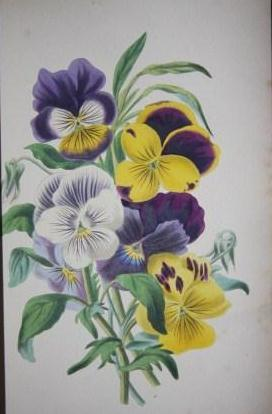 The Romance of Nature; Or, The Flower Seasons Illustrated: Meredith, Mrs. Charles and Louisa Anne ...