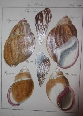 Abhandlung von den Land- und Flusschnecken, oder von Solchen Conchylien, welche nicht im Meere ...