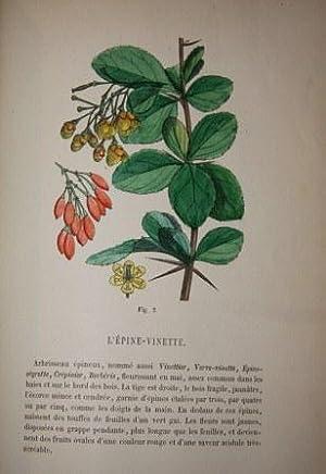 Lecons Elementaires de Botanique.: Le Maout, Emmanuel