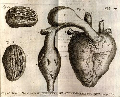 Ad Morbus Pectoris.: Haller, Albrecht v.