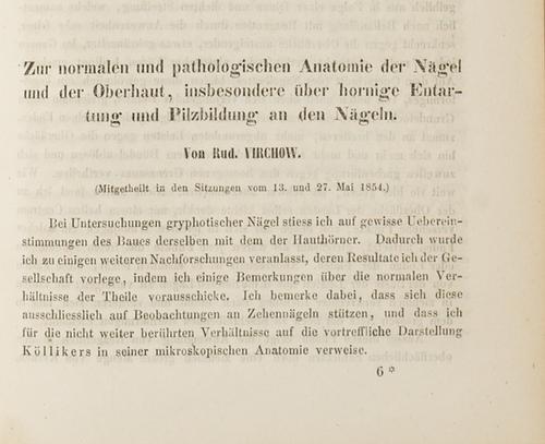 Zur normalen und pathologischen Anatomie der Nägel: Virchow, Rudolf