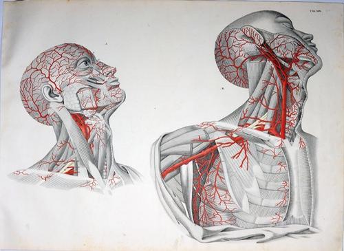 die arterien des kopfes - ZVAB