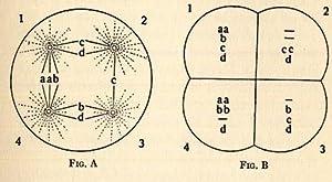 The Origin of Malignant Tumors.: Boveri, Theodor