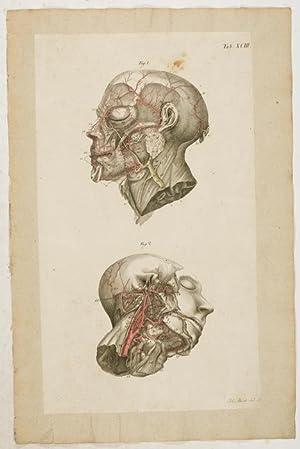 Anatomische Tafeln: Die Arterien des Gesichtes und des Kopfes nach ...