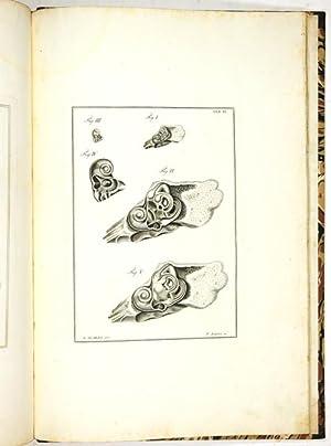 Anatomicae disquisitiones de auditu et olfactu. Edito: Scarpa, Antonio