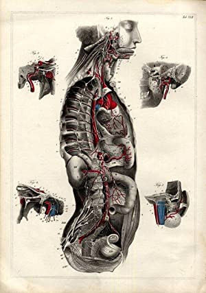 Shop Anatomie und Physiologie Collections: Art & Collectibles ...