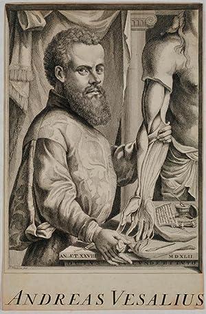 Portrait 1 C, Jan Wandelaar (1691-1759. Durch: Vesalius, Andreas =