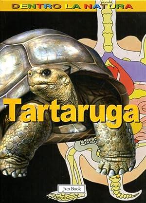La tartaruga.: Houghton,Gillian.