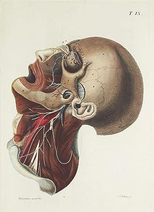 Chirurgisch-anatomische Abbildungen = Icones chirurgico-anatomicae in usum: ROSENMÜLLER, Johann Christian