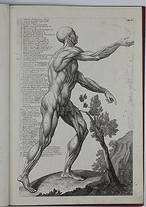 Kurtzer Begriff der Anatomie worinnen hauptsächlich die: DELSENBACH, Johann Adam