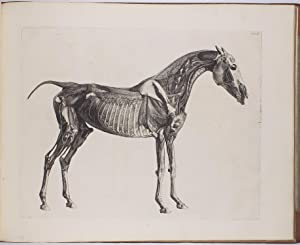 The Anatomy of the Horse. Including A: STUBBS, George