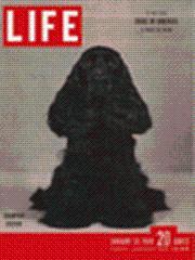 Life Magazine 31 January 1949 Cocker Spaniel, dream boy 1/31/49: Life Magazine 31 January...