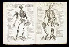 De humani corporis fabrica libri septem./Epitome librorum.: Vesalius, Andreas